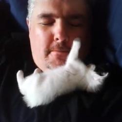 Chat qui aime les moustaches