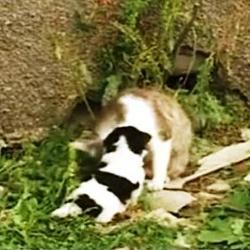 chat naissance georgie