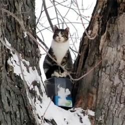 chat né dans un arbre ne veut pas descendre