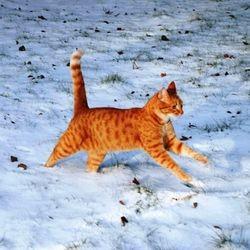 chat froid neige malade vétérinaire