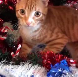 Chats aident à preparer Noël