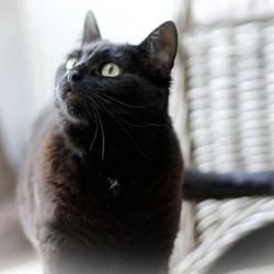 l 39 allergie aux chats bient t gu rie soci t wamiz. Black Bedroom Furniture Sets. Home Design Ideas
