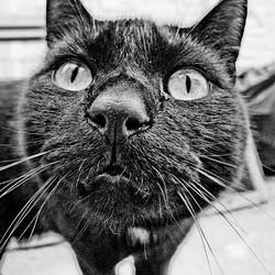 allergie aux poils de chat noir