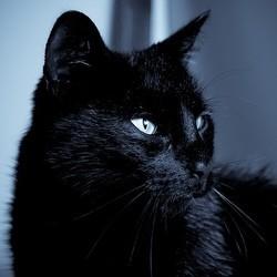 chat noir star de la spa pour halloween