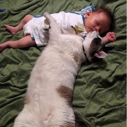 un chat dort avec un bébé
