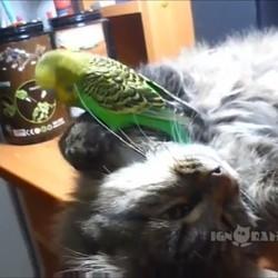 un chat et un oiseau