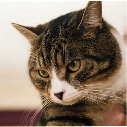 les oreilles des chats