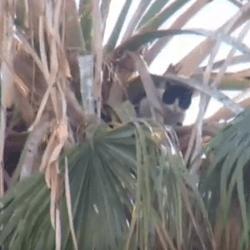 sauvetage chat arbre
