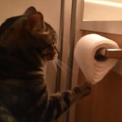 un chat joue avec du papier toilette