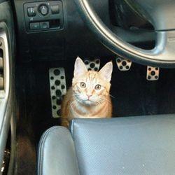 chat pare choc voiture