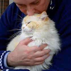 chat odeur tête