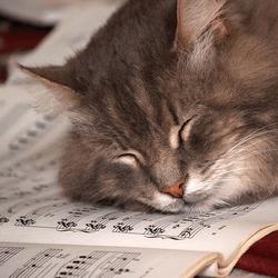 chat partition musique