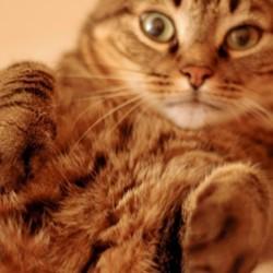 chat patounage comportement du chat