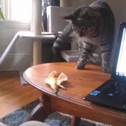 un chat effrayé par une peau de banane