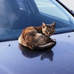 chat écrasé voiture survit