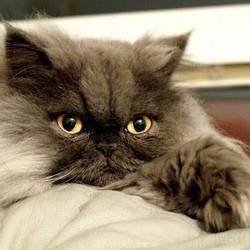 un chat parcourt 5 500 kilomètres dans une valise dans la soute d'un avin