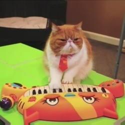 le chat pianiste