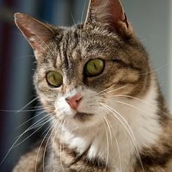 chat trouble alimentaire pica comportement comportementaliste