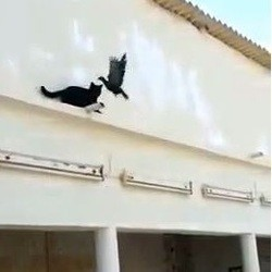 un chat et un pigeon