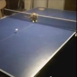 Un chat joue au ping-pong