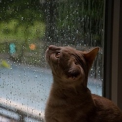 chat pluie