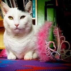 chat plus riche du monde