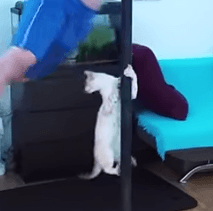 Chat qui fait du pole dance