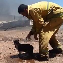 un ompoer sauve un chat victime d'un incendie