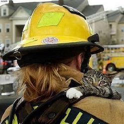 Un chat sauve un adolescent d'un incendie