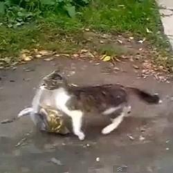 chat porte les courses video