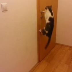 Chat qui ouvre 5 portes