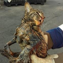 Chat trouvé dans les poubelles