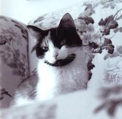 oscar chat prédit la mort des patients