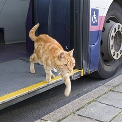 chat prend bus tout seul