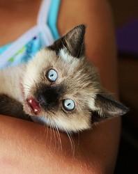 chat qui parle