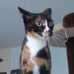 Un chat ninja, plus rapide que son ombre ! (Vidéo du jour)