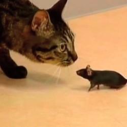 un rat et un chat meilleurs amis