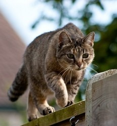 chat chasse oiseaux mammifères faune sauvage