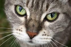 chat réincarnation d'une femme