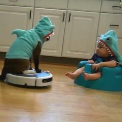 un chat et un bébé déguisés en requin