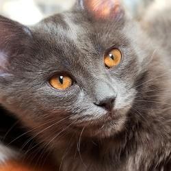 Mon chat perd ses poils pas - Chat qui perd pas ses poils ...