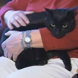 un chat retrouve ses maîtres 6 mois après sa disparition