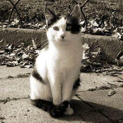 chat retrouve maitre sixieme sens Brigitte Bardot