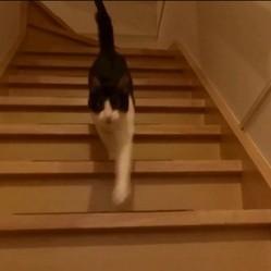 un chat retrouve son humain
