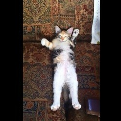 un chaton qui dort