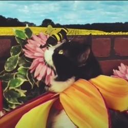 Les rêves des chats