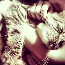 ronronnement chat ronron thérapie