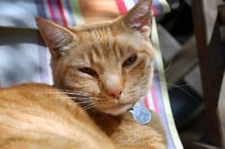 pourquoi chat ronronne