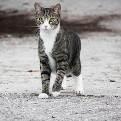 un chat parcourt 20 kilomètres pour retrouver ses maîtres