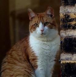 un chat retrouvé 8 ans après sa disparition